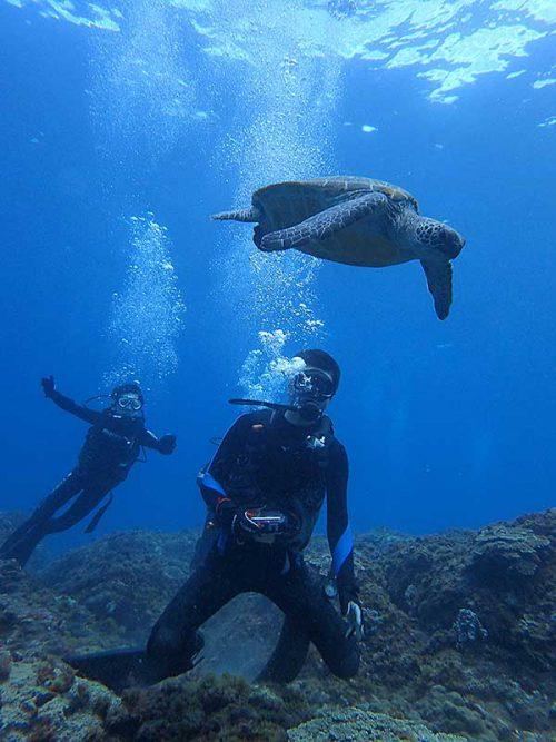 泳ぐウミガメじっくり眺め