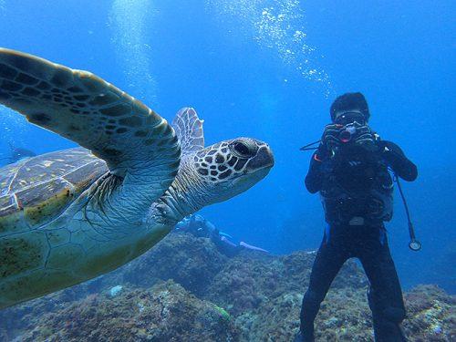 ウミガメ撮ってみたりして