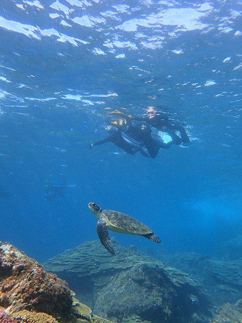 ウミガメ見つつ底土の海を周っていって