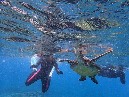 ウミガメたまに息継ぎしてたり