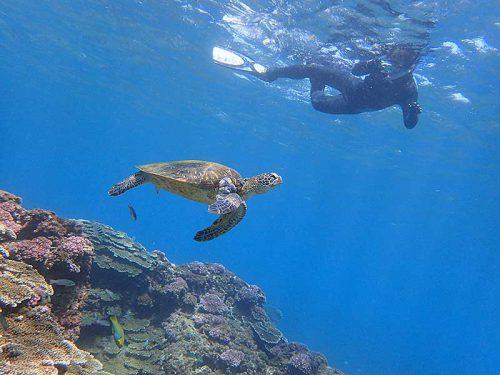 上からウミガメ撮ってみて
