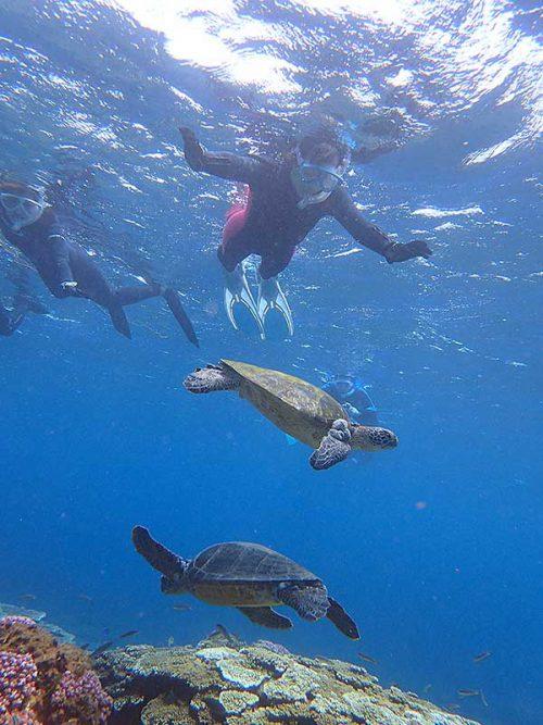 ウミガメ達を上からゆっくり見てみたり