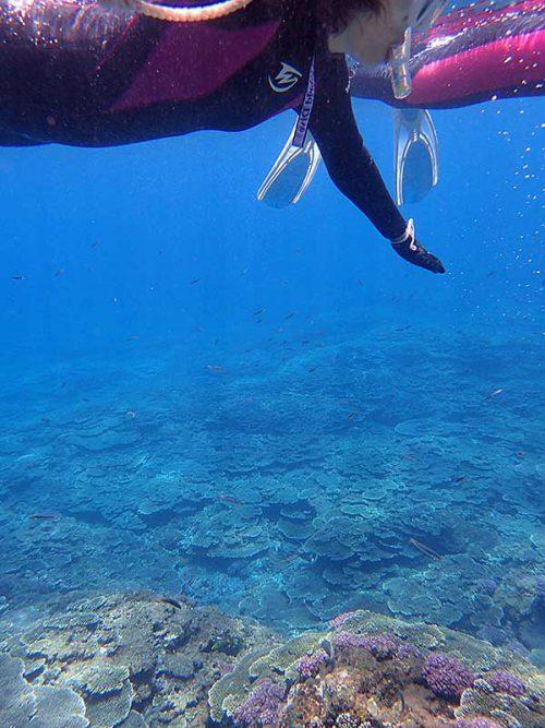 底土の海を泳いで周り