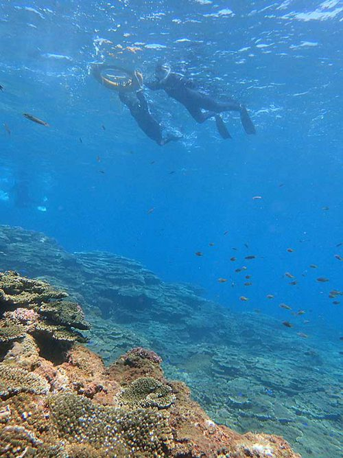 サンゴの上には色々魚もたくさんいたり