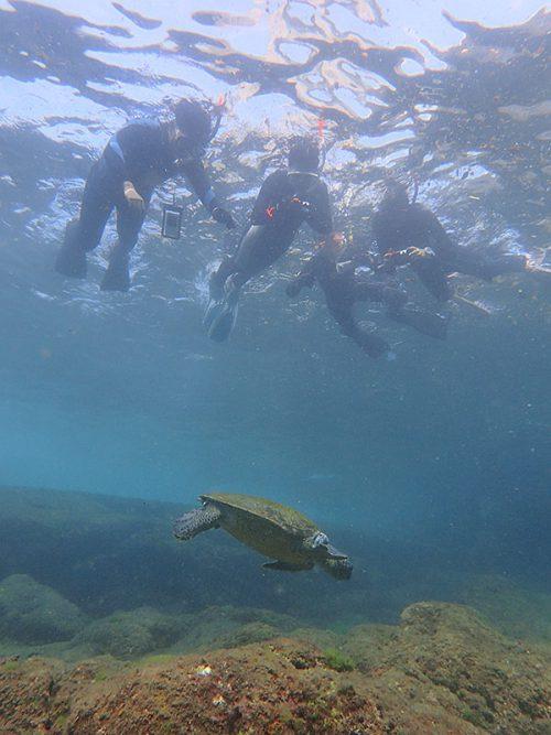 のんびり泳ぐウミガメ見てみて
