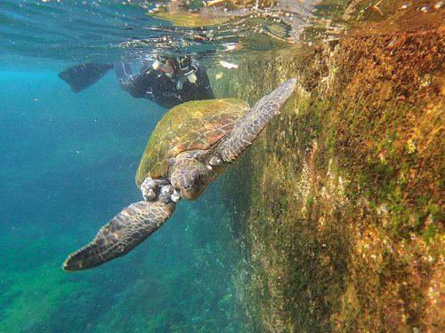 間近でウミガメ撮ったり見たり