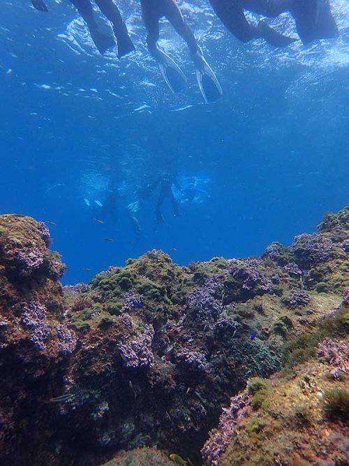 根上に集まる魚も見ながら沖へでて