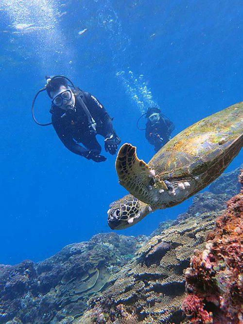 ウミガメと一緒に少し泳いでみたりして