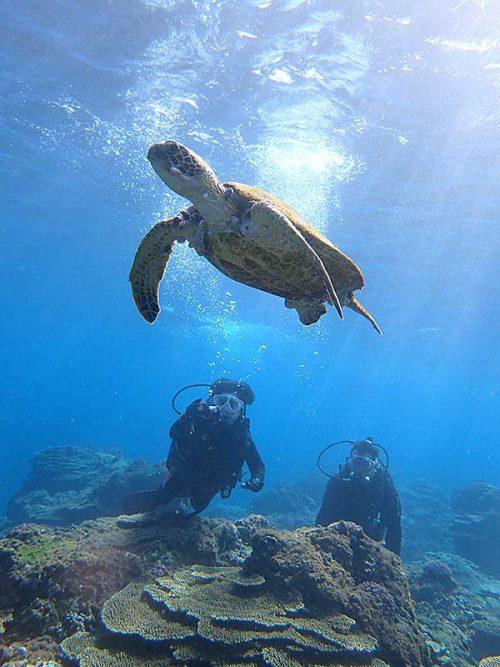 泳ぎ去てくアオウミガメを見送って