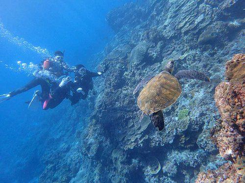 ウミガメと一緒に少し泳いで周ってみたり