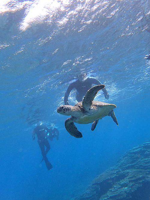 今日もみんなでウミガメ見たり