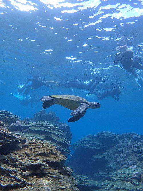 泳ぐウミガメ上から見たり