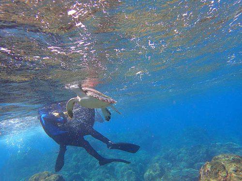 呼吸しに上がってきてたアオウミガメ
