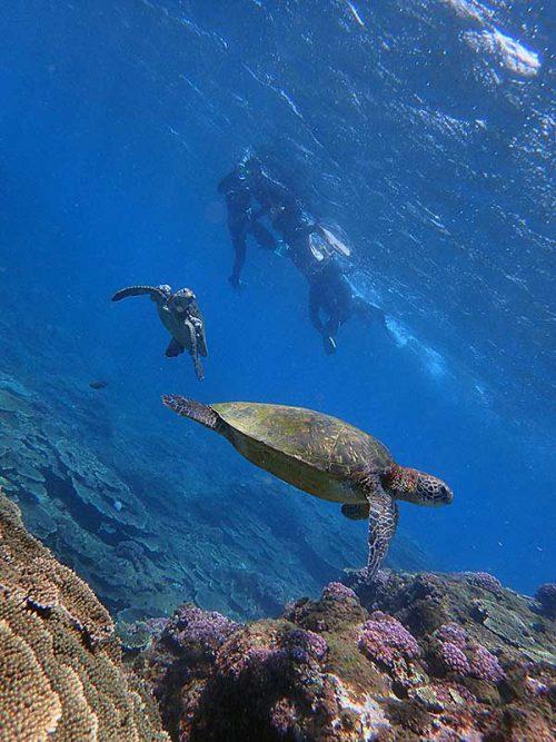 ちょっと沖には今日もウミガメのんびりしてて