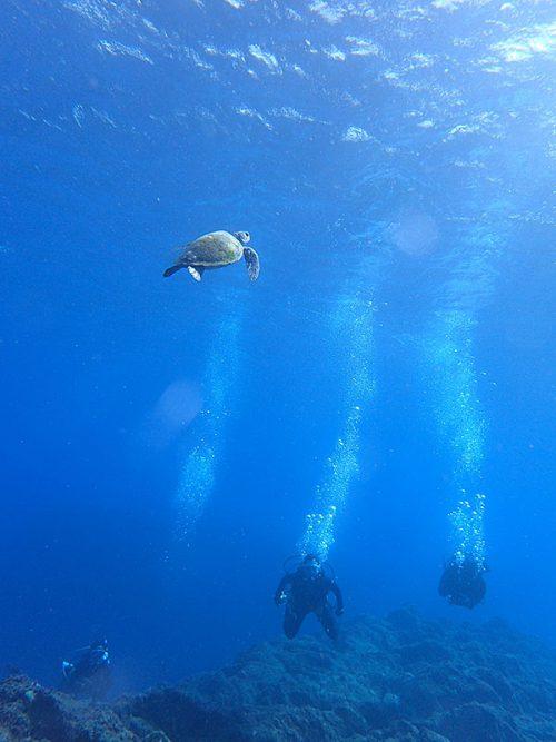 呼吸しに上がっていってたウミガメ見たり