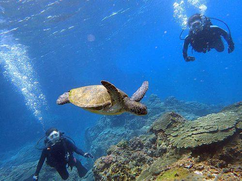 ウミガメ泳いでいたので見てみたり