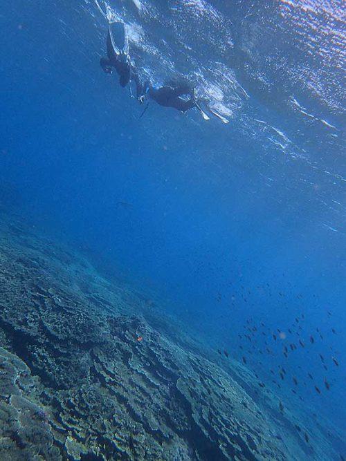 キホシスズメダイの群れとか見つつ泳いで出ていき