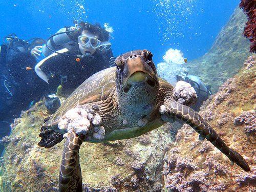 カメラ目線なアオウミガメ