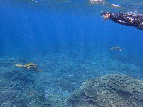 集まるウミガメ見て周り