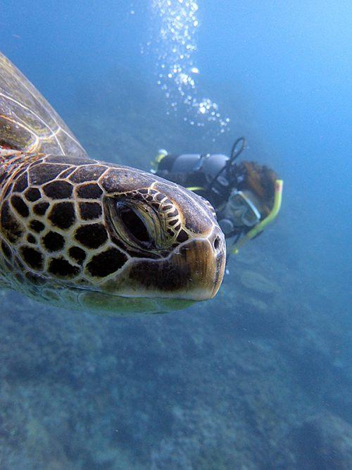 ウミガメと一緒に泳いで戻り