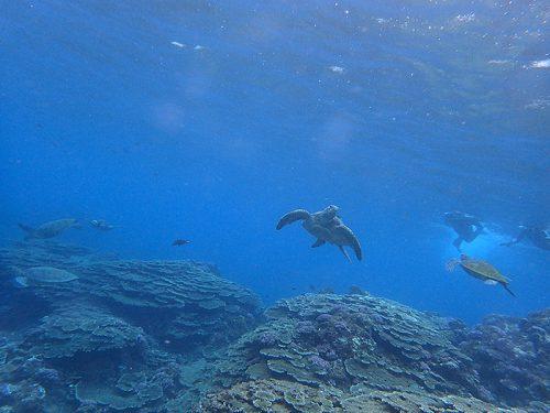 海を覗けばウミガメのんびり集まってたり