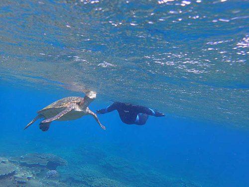 息継ぎしてるアオウミガメ