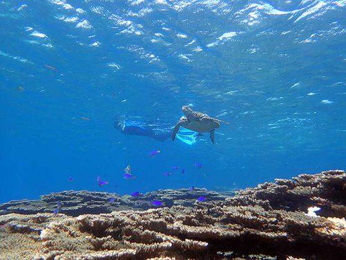 サンゴと魚とウミガメ見て周り