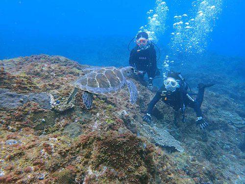 沖では小さいウミガメ見かけ