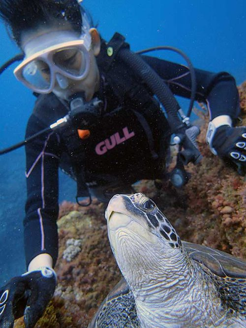 顔上げてこちらを伺うアオウミガメ
