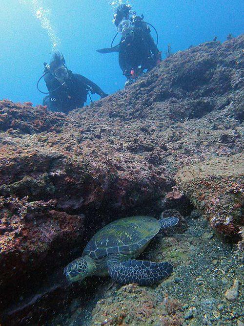 岩の隙間で休憩中のアオウミガメ