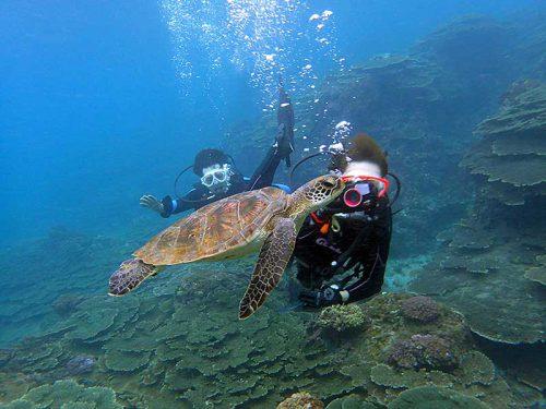 目の前泳ぐウミガメ撮ったり