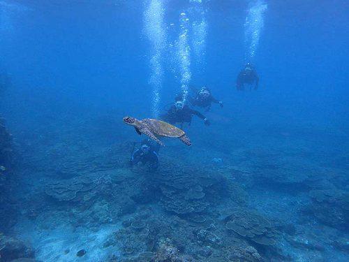 目の前泳ぐアオウミガメ