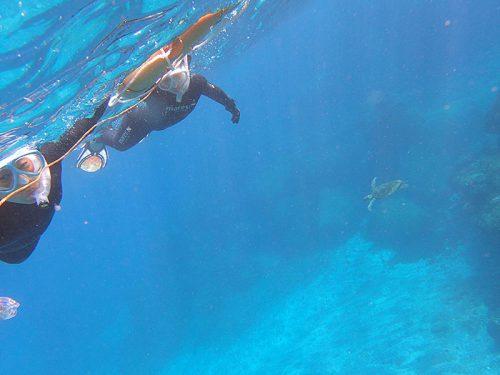 後ろの方をウミガメ泳いでいたりして