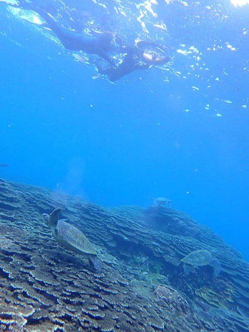 沖にはたくさんウミガメいたり