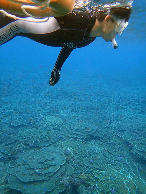 サンゴも見ながら泳いでいって