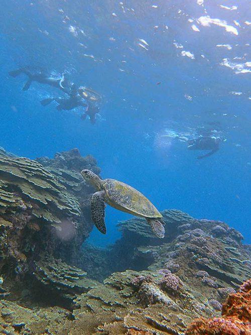 ウミガメのんびり見て周り