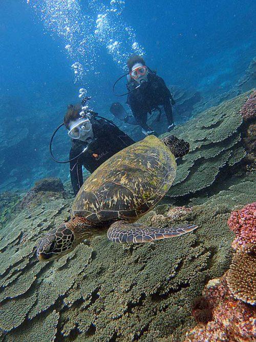 アオウミガメと一緒に泳いでみたりして