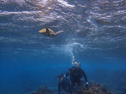 上の方にも小さいウミガメ泳いでて