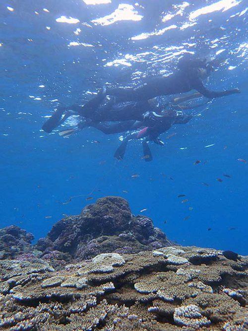 サンゴも見ながらゆっくり周り