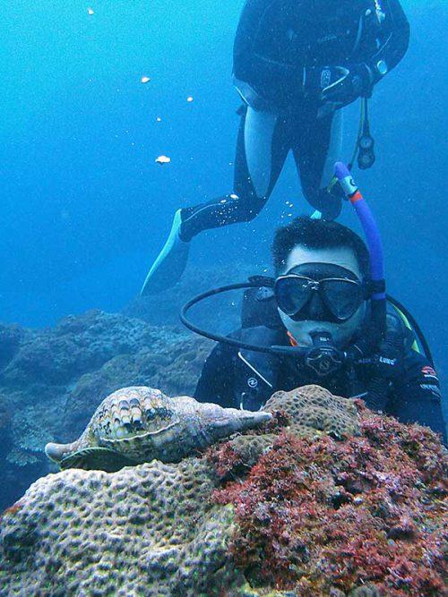 小ぶりなホラ貝
