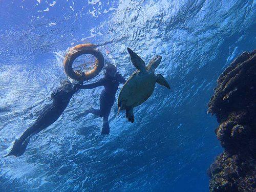 のんびり上からウミガメ眺め