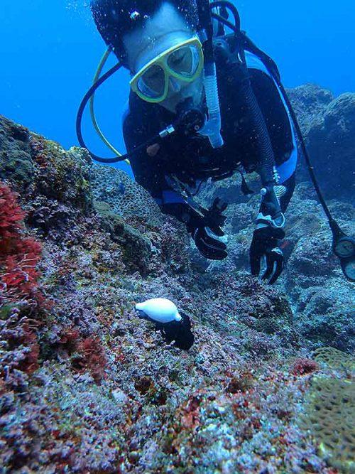 ウミウサギ貝