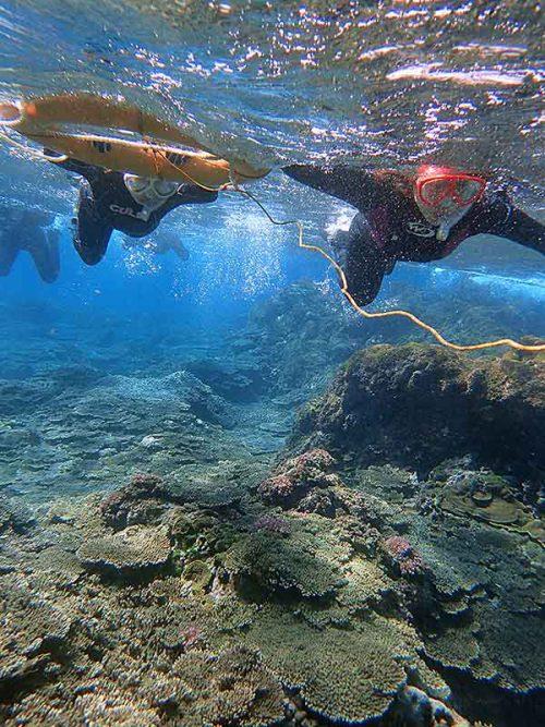 サンゴのとこまで泳いでいって