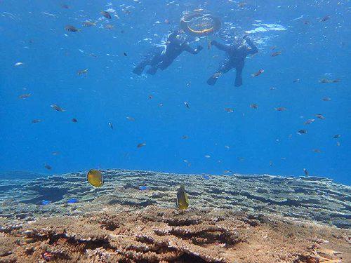 サンゴの上には色々魚もたくさんで