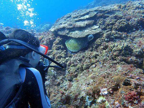 隙間からこっちを見ていたウミガメさん