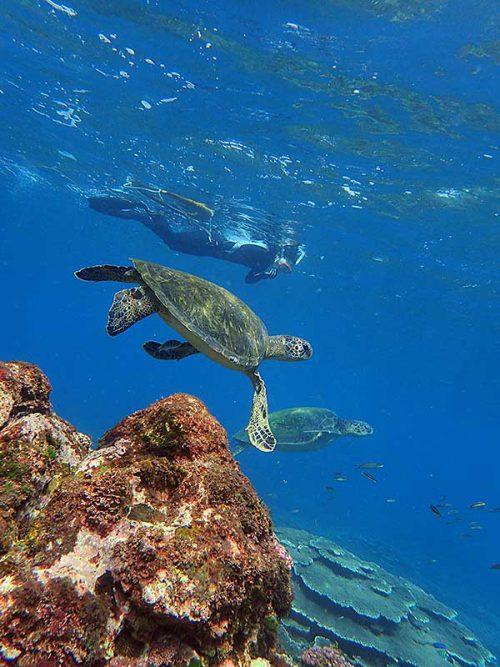 ウミガメ集まる底土の海で