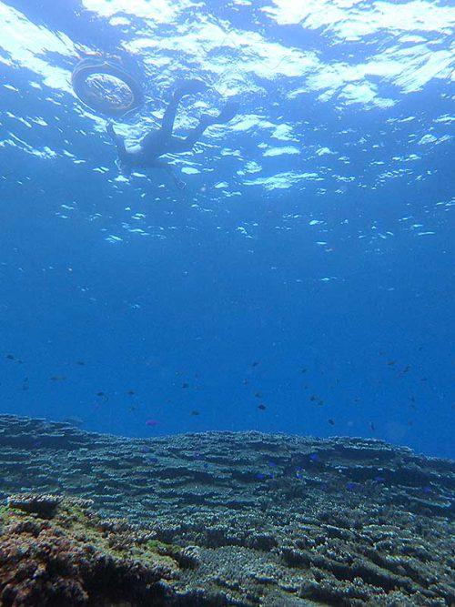 サンゴ上の魚達も見て周り