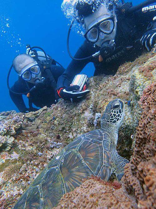 窪みで休むアオウミガメ