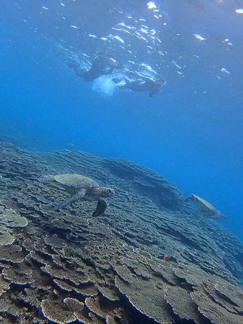 上からウミガメ眺めて周り