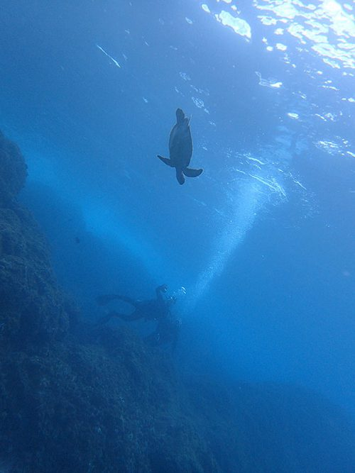 ウミガメ遠目に見てみたり